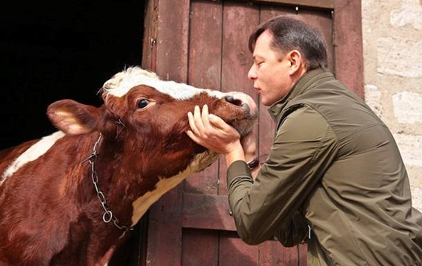 Корови та ідеології