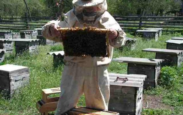 Бджоли не винні