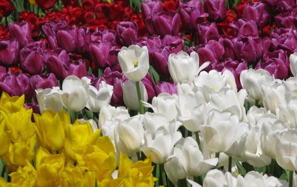 А на Спивочем поле зацвели цветы...