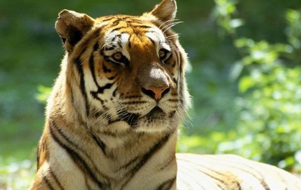 Чи стане Україна східноєвропейським тигром?