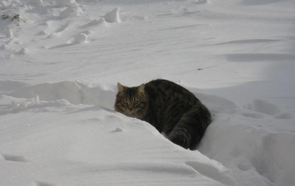 Коти і сніг