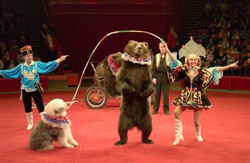 Верховна Рада? Цирк на дроті!