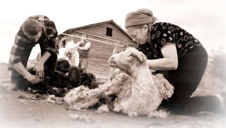 Бути байдужою вівцею -  (під)свідомий вибір чи наслідок диктаторського режиму?