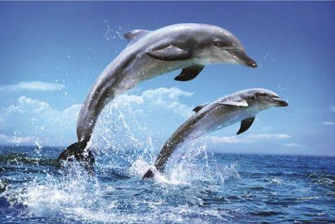 Дельфинарии -- тюрьмы для дельфинов.