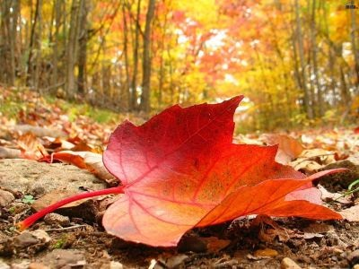 Осінь накриває з головою