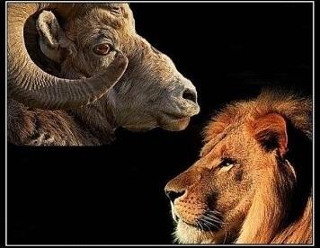 Овцы – или спящие, но львы?