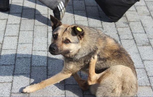 Новый взгляд на Донецк: чистота, ремонты дорог и стерилизованные собаки