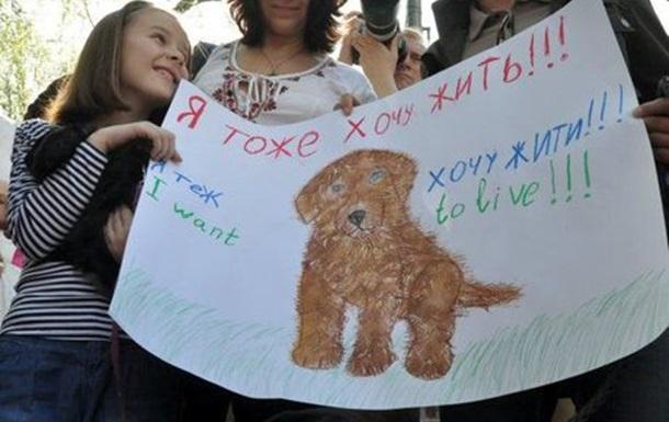 Пікетуємо Кабмін разом з сім єю, собаками і кроликом (ФОТО)