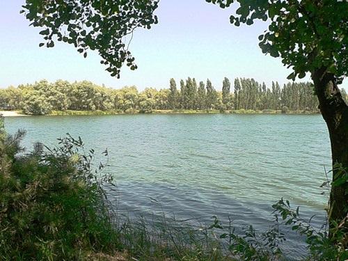 Сквирская райрада, единственная на Киевщине, не дала украсть лес у людей