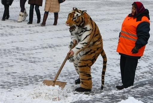 Влада бореться зі снігом - мультфільм