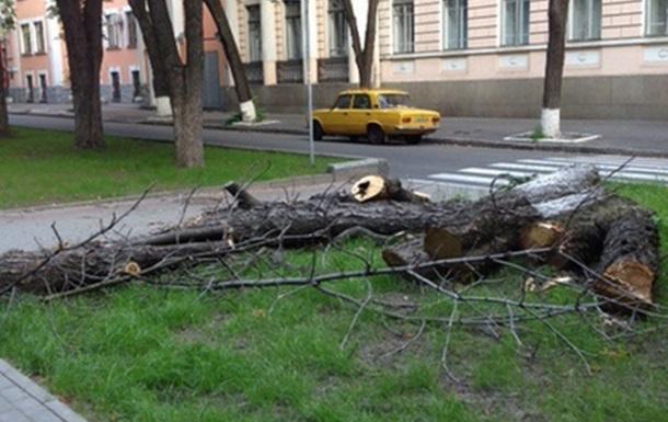 В центре Киева возле офиса Партии регионов спиливают старые каштаны