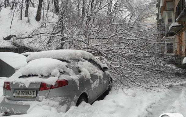 Київські снігопади. Автомобілі під поваленими стихією деревами