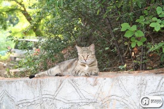 Ситі, нахабні і ледачі: 50 котів на курорті Гурзуф