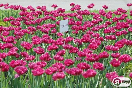 Національний ботанічний сад квітує
