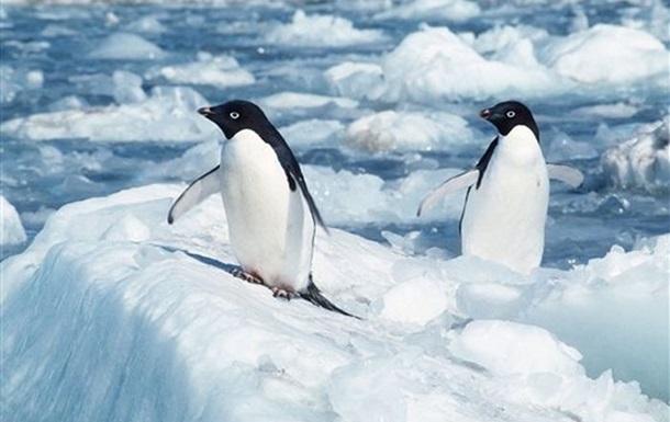 В Антарктике вертолет с австралийскими учеными совершил аварийную посадку