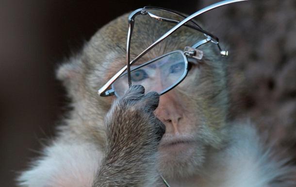Ученые обнаружили сходство культурной эволюции человека и шимпанзе