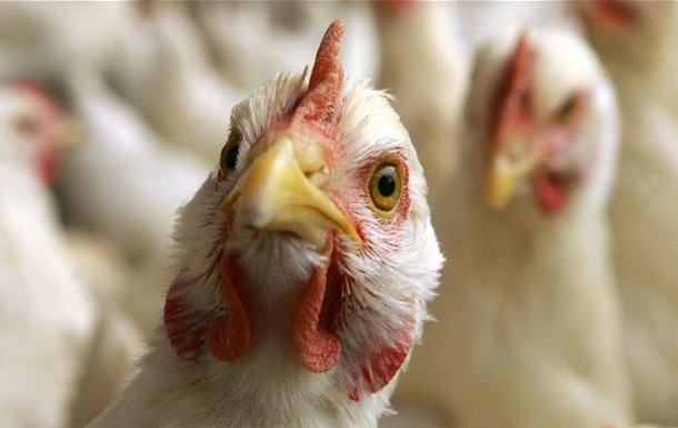 Первый случай смерти от птичьего гриппа зафиксирован в Канаде