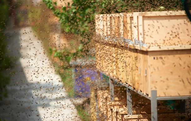 Учёные доказали, что пчёлы могут вылечить рак