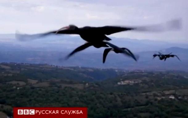 Британские ученые узнали загадку птичьего клина