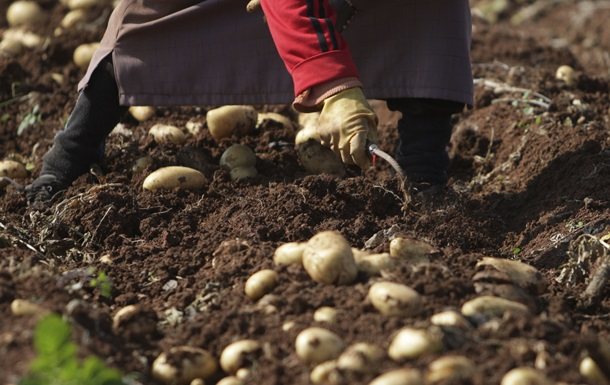 Беларусь запретила картофель и розы из ЕС