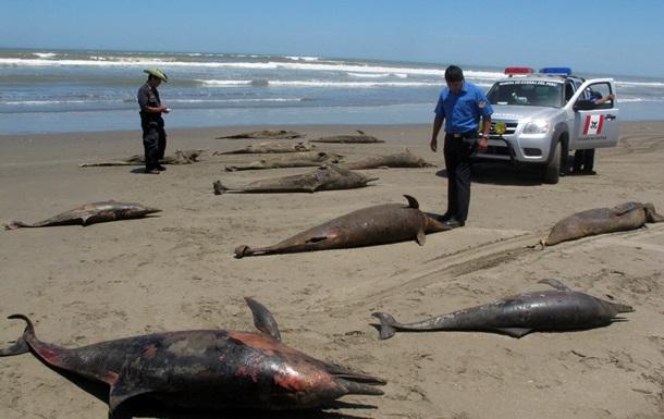 Около 500 дельфинов погибли на перуанском побережье