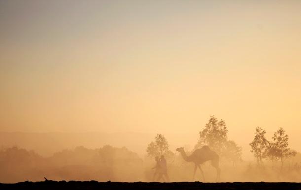 Кости верблюдов указали на несоответствия в Ветхом Завете