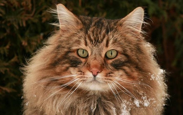 Американец рассылал кошачьи фекалии компаниям, которые отказались с ним работать