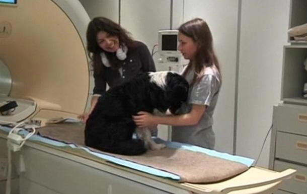 В мозге собак обнаружен речевой центр