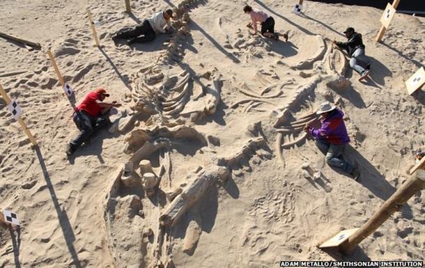 Ученые раскрыли тайну гигантского кладбища китов в Чили