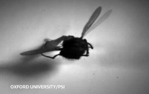 Ученые впервые сняли на видео работу мускулов насекомого в полете