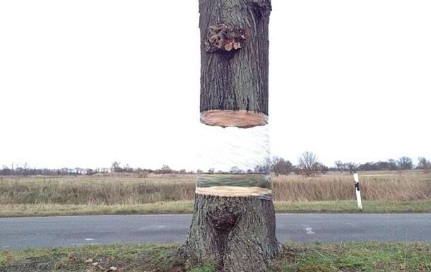 На обочине дороги в Германии появилось  летающее  дерево