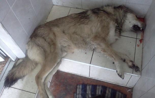 Рассказ о убийствах собак в Киеве основан на реальных событиях...