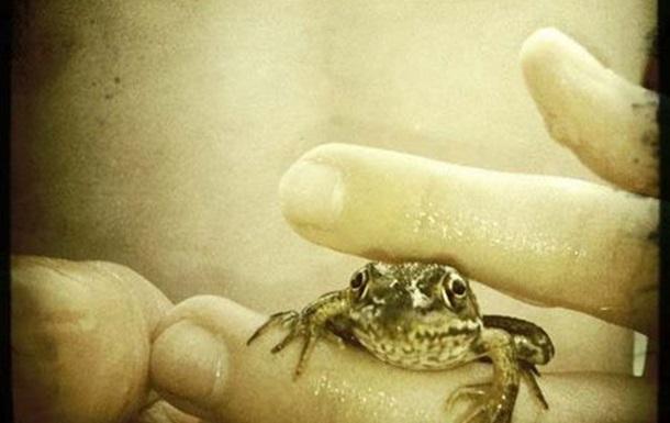 Нелегка доля і нагла жаб'яча смерть...
