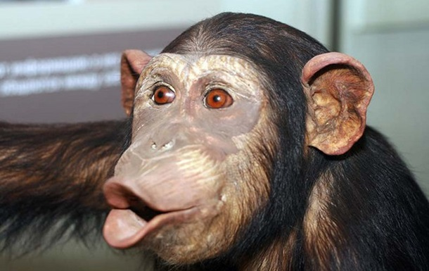 Чому мавпа - найкращий депутат