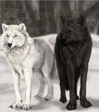 «Два вовки»