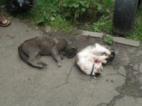В Україні поширюється вірус садизму