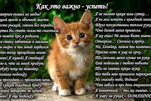 Сторінка Київського зоопарку