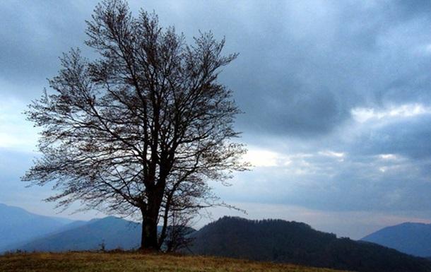 Рахівські лісничі оголосили жителям села Богдан комендантську годину