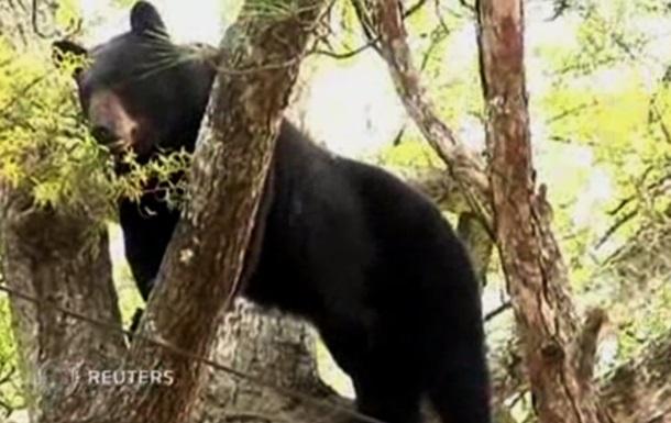 В США спасателям пришлось усыпить медведя, чтобы снять его с дерева