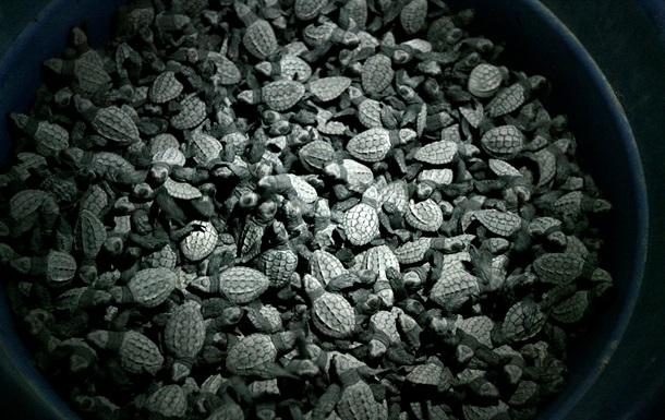 Во Франции сгорел склад с сотнями змей и черепах