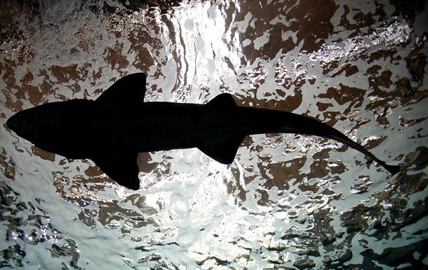Американец поймал на удочку 365-килограммовую акулу