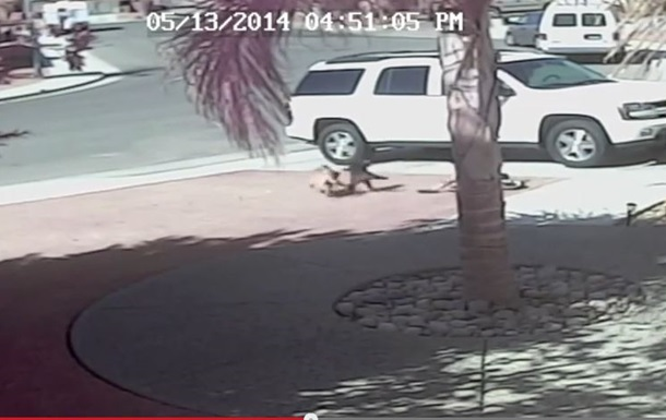 В сети появилось видео, как кошка спасла маленького мальчика от собаки