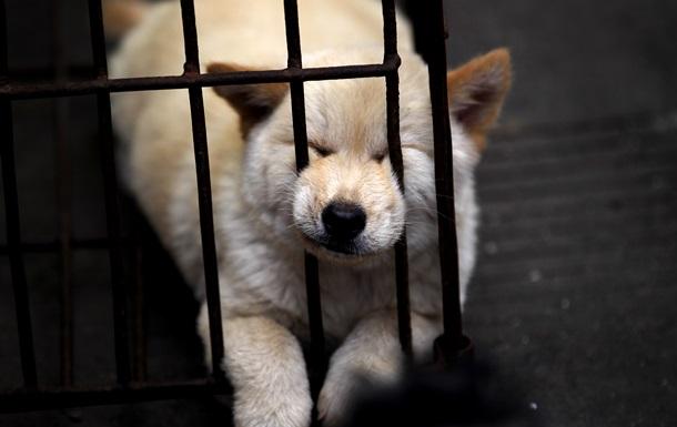 В Китае пройдет кулинарный фестиваль собачьего мяса