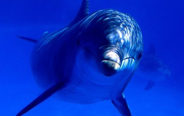 В Индии признали дельфинов личностями и запретили дельфинарии