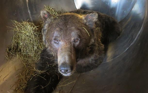 Двое россиян получили тюремный срок в Китае за контрабанду медвежьих лап