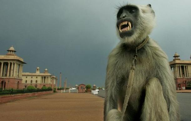 Патруль в костюмах обезьян будет защищать парламент Индии