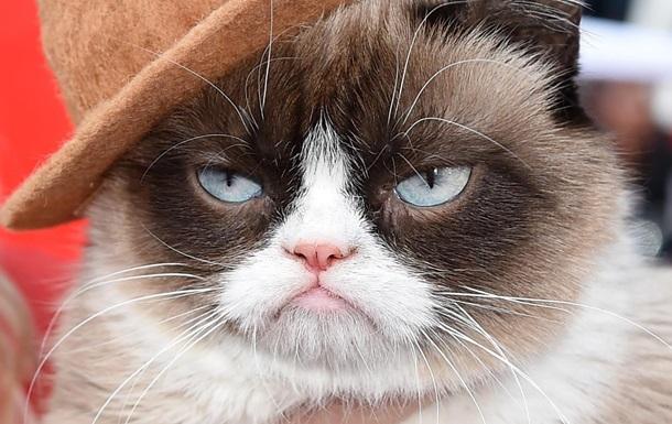 В Нью-Йорке знаменитая кошка Grumpy Cat презентовала книгу
