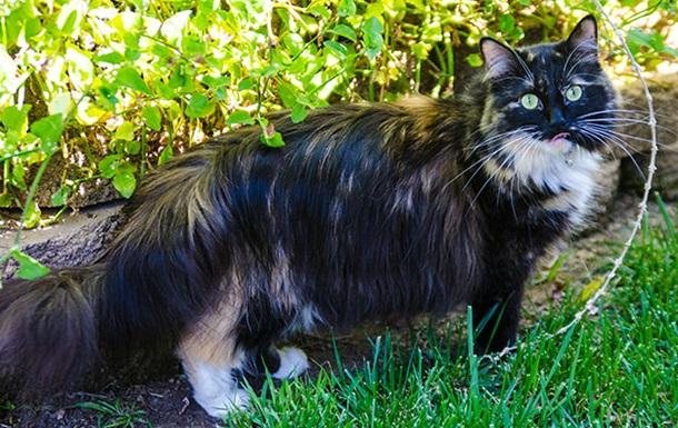 Кошка из США установила рекорд Гиннесса