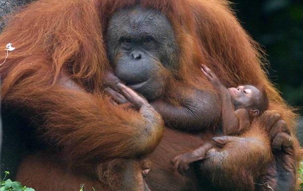 Корреспондент: Деревня обезьян. Письмо из Индонезии