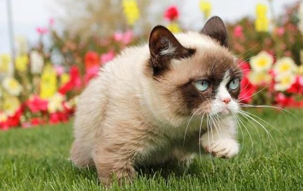 В Facebook зарегистрировано 13% кошек Великобритании